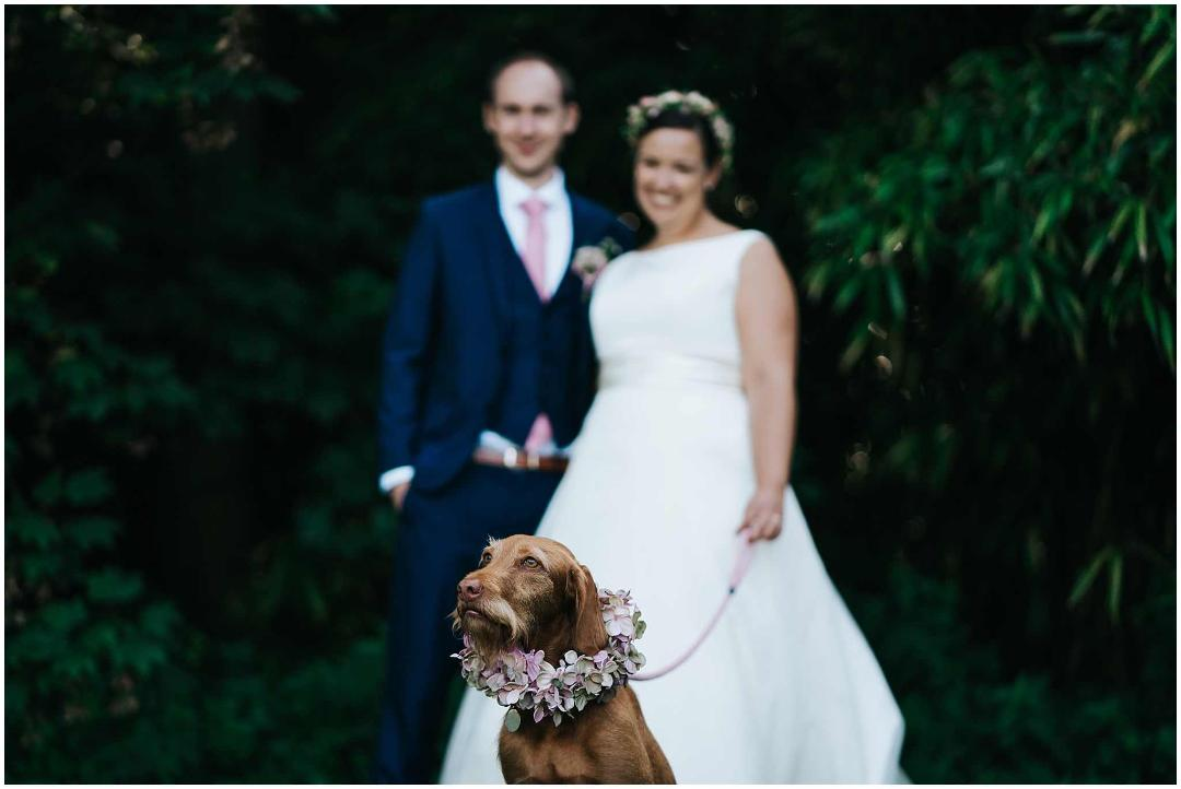 Dog flowers, floral crown, bride and groom, wedding day